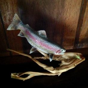 raindow trout to fly